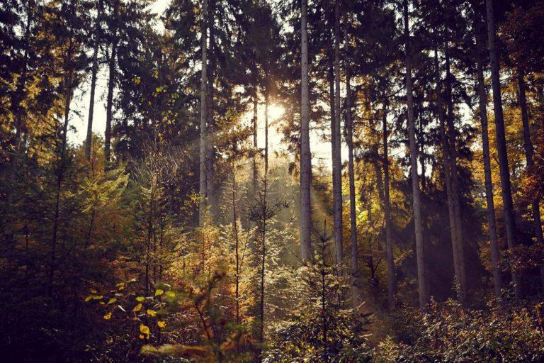 Trip ins Grüne – mit der S-Bahn ins Alte Land