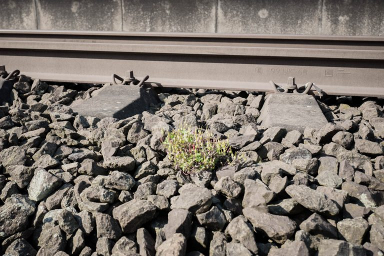 Was wächst denn da? – Pflanzen an Hamburgs Schienen und Bahnhöfen