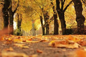 Der goldene Herbst ist da! Ab in die S-Bahn und raus in die Natur