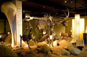 Auf Spurensuche im Archäologischen Museum Hamburg